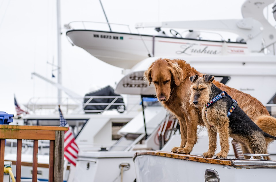 Sorry - we're after a sailing companion who can hand, reef and steer not ruff and peer...