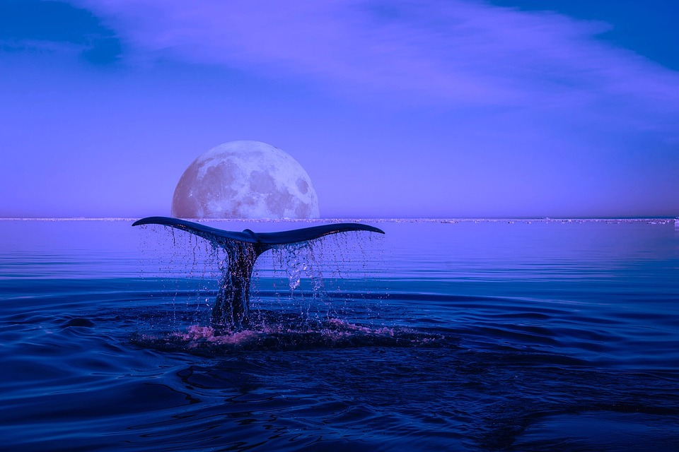 Whale raises tail in a moonscape